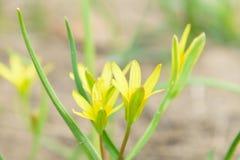 Ovanlig blommadoftZsolt The skönhet av naturen Royaltyfria Foton
