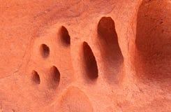 Ovanlig erosionmodell i en vägg av röd sandsten Royaltyfri Foto