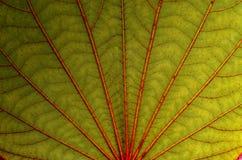 Ovanlig makro av det gröna bladet Royaltyfri Foto