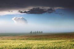 Ovanlig plats i dimmig gryning Royaltyfri Bild