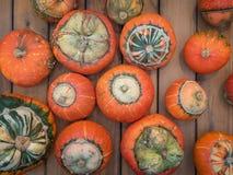 Ovanlig typ av pumpaturbansquash på en träräknare Många orange pumpa på en trätabell Pumpa för en ferie royaltyfria bilder