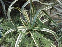 Ovanlig växt Royaltyfri Fotografi