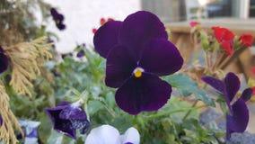 Ovanliga blommor Fotografering för Bildbyråer