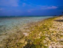 Ovanliga Maldiverna royaltyfri fotografi