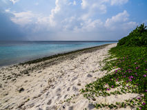 Ovanliga Maldiverna arkivbild