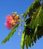 Ovanliga tropiska blommor Fotografering för Bildbyråer
