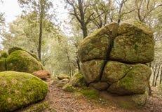 Ovanligt geologiskt vaggar bildandeskogsikt royaltyfria bilder