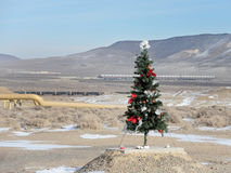 Ovanligt ställe för en julgran royaltyfria bilder