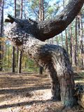 Ovanligt träd fotografering för bildbyråer
