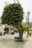 Ovanligt träd i gatan arkivfoto