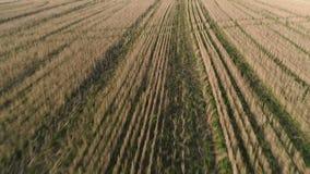 Ovannämnda gröna fält för flyg på den tidiga våren för solnedgång, flyg- panoramautsikt lager videofilmer