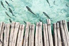 Ovannämnt klart turkosvatten för träplattform med fisken Fotografering för Bildbyråer