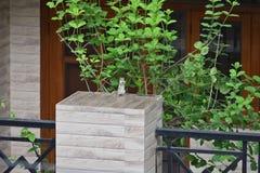 Ovation debout d'écureuil image stock