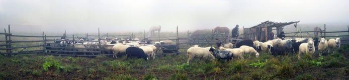 Oveja-pastores de la leche de Hutsuls Fotografía de archivo libre de regalías