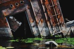 Ovejas abandonadas en el río de Pripyat Fotografía de archivo