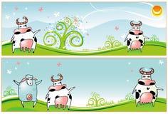 Ovejas de las vacas de las banderas del resorte Imagen de archivo libre de regalías