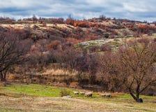 Ovejas debajo del árbol en paisaje del otoño Imagenes de archivo