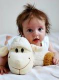 Ovejas del bebé Fotos de archivo libres de regalías