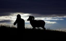 Ovejas del hombre y de carnero con grandes cuernos imagen de archivo