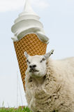 Ovejas delante del helado Foto de archivo libre de regalías
