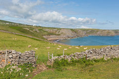 Ovejas en bahía de la caída de la costa de País de Gales de la ladera Galés la península de Gower BRITÁNICA cerca a la playa de R Foto de archivo