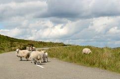 Ovejas en el camino en Irlanda Foto de archivo libre de regalías