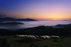 Ovejas en el crepúsculo en la montaña de Saibi Imágenes de archivo libres de regalías