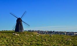 Ovejas en el molino de Rottingdean, Sussex del este, Reino Unido Imágenes de archivo libres de regalías