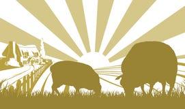 Ovejas en escena del campo de granja Foto de archivo libre de regalías