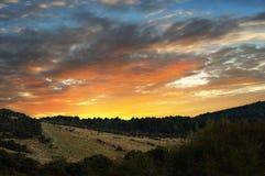 Ovejas en la puesta del sol Foto de archivo libre de regalías