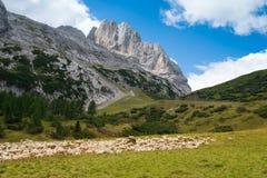 Ovejas en montaña Fotografía de archivo