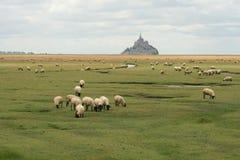 Ovejas en un campo antes del santo Miguel del mont Fotografía de archivo