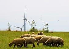 Ovejas en un campo con los molinoes de viento Fotos de archivo libres de regalías