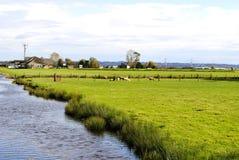 Ovejas en un campo de granja fotos de archivo