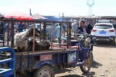 Ovejas en vehículo en el mercado del bazar del ganado de Uyghur domingo en Kashgar, Kashi, Xinjiang, China fotos de archivo
