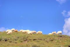 Ovejas encima de las montañas Imagen de archivo