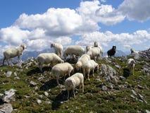 Ovejas encima de una montaña Fotos de archivo libres de regalías