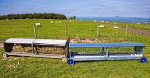 Ovejas Hay Feeder en granja de la colina en Inglaterra Imagenes de archivo