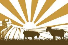 Ovejas o corderos de la silueta en granja Fotografía de archivo libre de regalías