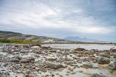 Ovejas que exploran las rocas durante un lowtide en Noruega septentrional Imagen de archivo
