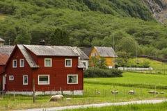 Ovejas que pastan cerca de una casa en Noruega Imagen de archivo