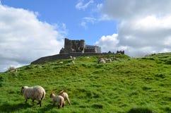 Ovejas que pastan delante de la roca de Cashel Foto de archivo libre de regalías