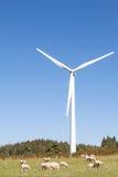 Ovejas que pastan en el pie de una turbina de viento contra un bl soleado Foto de archivo