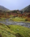 Ovejas solitarias en el valle de Seathwaite imágenes de archivo libres de regalías