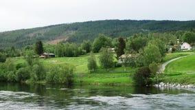 Ovejas y corderos en paisaje del pasto y del río almacen de video