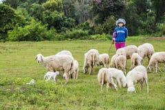 Ovejas y granjero Fotografía de archivo libre de regalías