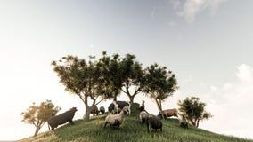 Ovejas y vacas que pastan Foto de archivo libre de regalías