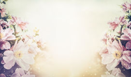 Ovely floral pastel color background, banner Stock Photos