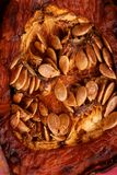 Oven baked pumpkin with seeds Royalty Free Stock Photography