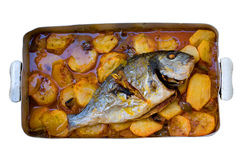 Oven fish. Gilthead bream fish roasted in a tray Stock Photos